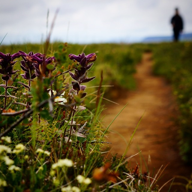 Hiking the Eyjan trail up to the cliffs of Aspyrgi in northern #iceland. #nature
