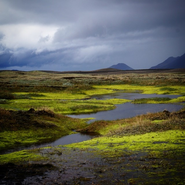 Stopped for a stretch along a comparatively dull portion of the road and went for a short walk. Just over the first hill we spied this amazing green oasis in the middle of vast rock fields. There's beauty hidden everywhere in #iceland. #nature