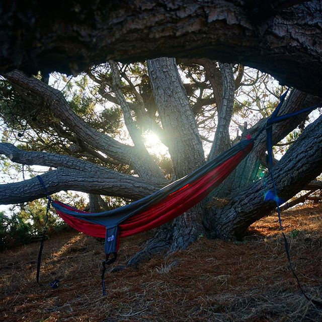 A gorgeous #campsite at Steep Ravine. Slept the night in this cozy #eno hammock. #camping #california #nofilter
